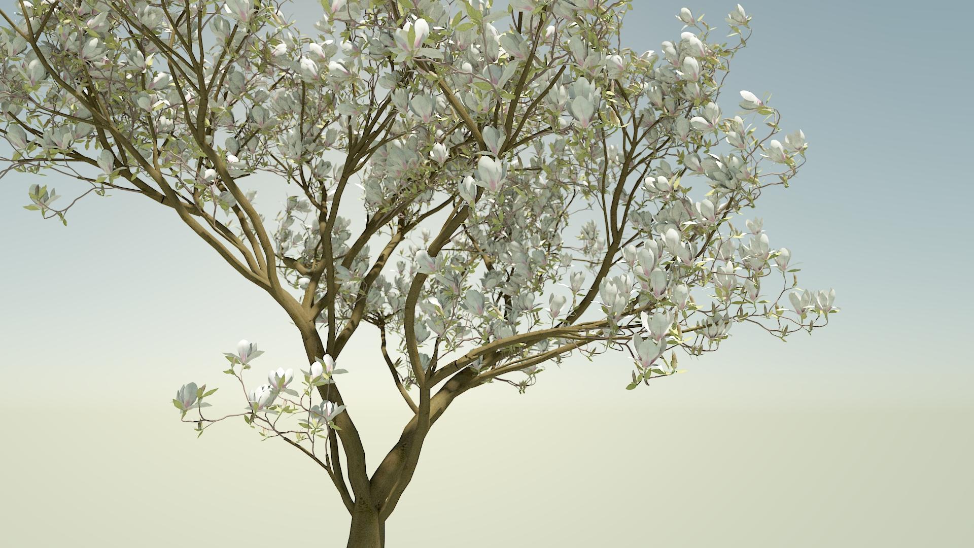 TreeMagnolia1