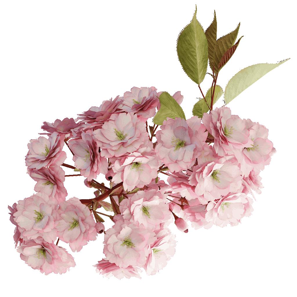 Japanese Cherry - The Grove 3D Trees