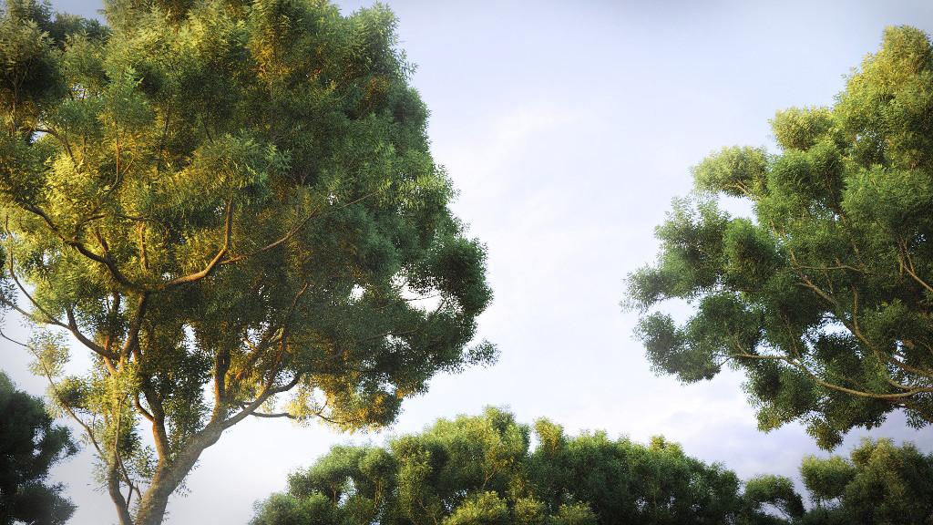 AshTrees