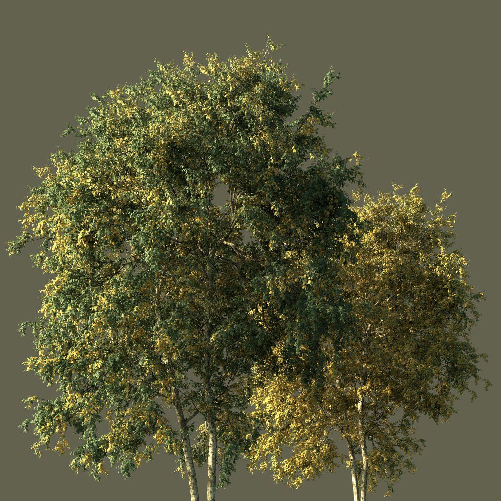 PaperBirchFall3DTrees
