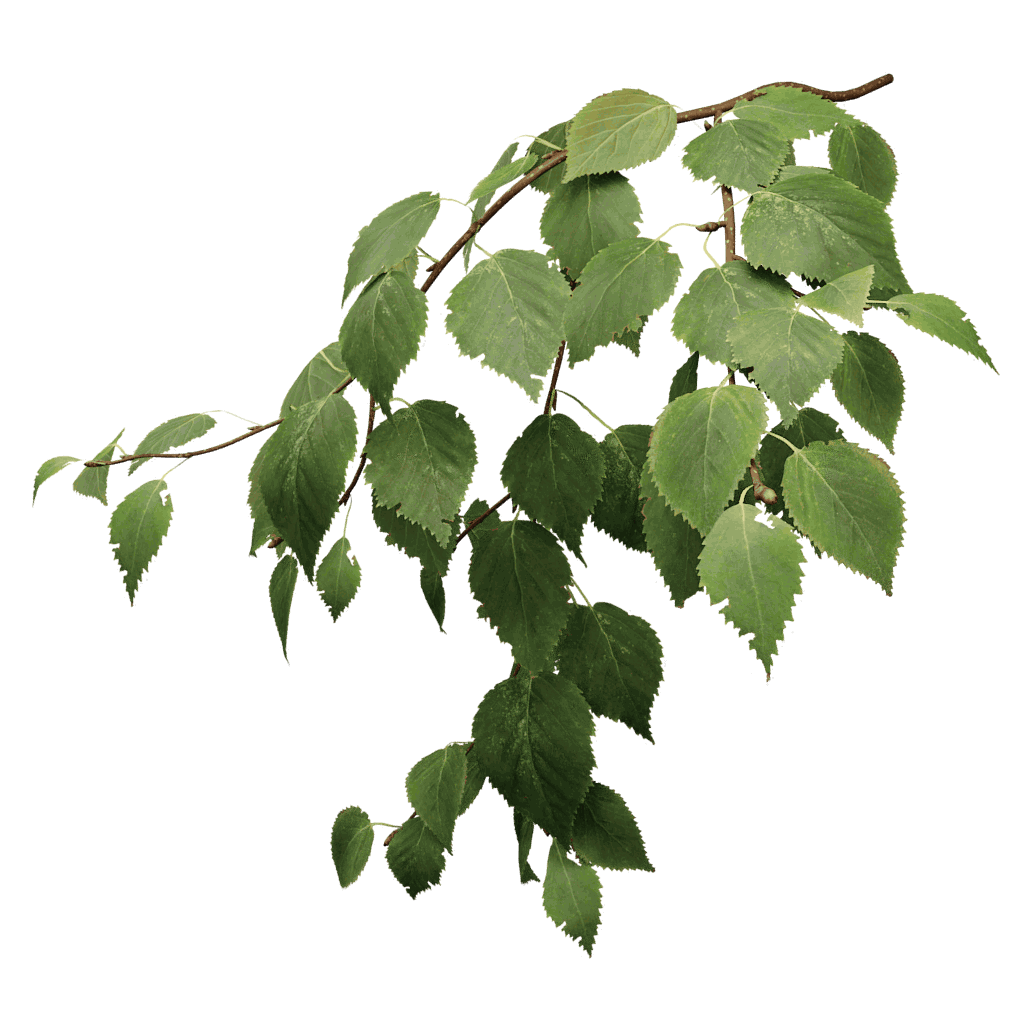 Paper Birch - The Grove 3D trees